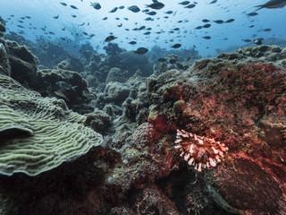 Unterwasser - Riff - Korallenriff - Seeanemone - Schwamm - Taucher - Tauchen - Curacao - Karibik