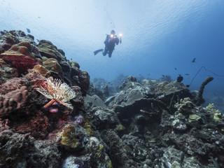 Unterwasser - Riff - Korallenriff - Rührenwurm - Schwamm - Taucher - Tauchen - Curacao - Karibik