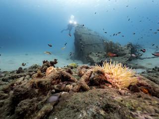 Unterwasser - Riff - Wrack - Schiffswrack - Schwamm - Taucher - Tauchen - Curacao - Karibik