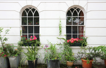 Residential facade with window boxes with blooms