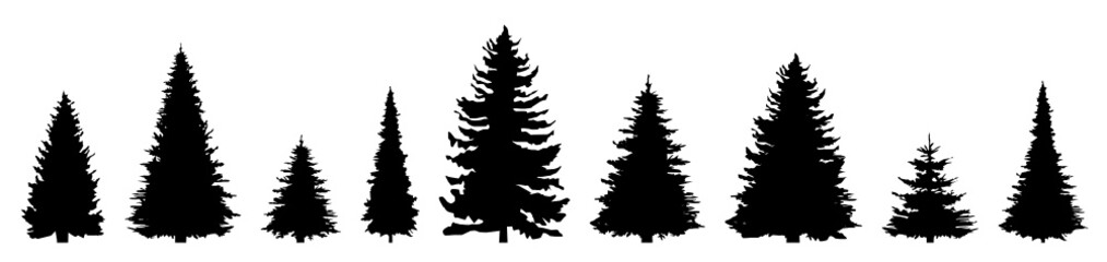 Silhouette Nadelbäume