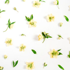 Beautiful yellow hellebore flowers and green leaf texture on white background. Flat lay, top view. Floral lifestyle composition.