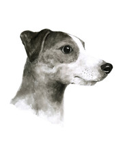 Jack Russel Terrier dog ink watercolor black and white illustration