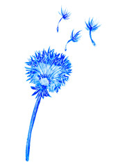 Blue dandelion silhouette on white background.Wild flower.Watercolor hand drawn illustration.