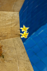 Two yellow orchids floating in swimming pool