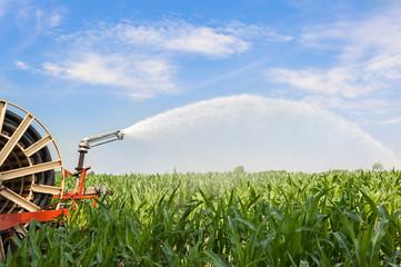 Water sprinkler installation in a field of corn.