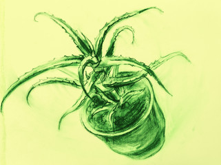 Drawing of an aloe in a pot of a falling from a table