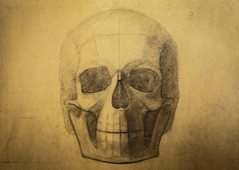 Figure skull sanguine on toned paper