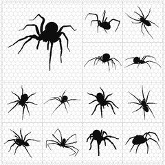 Black silhouettes of spiders