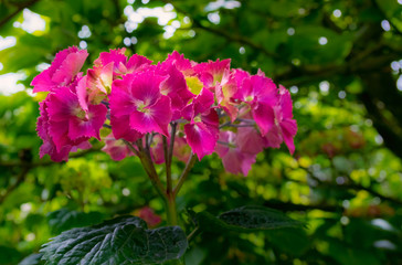 Pink flower.