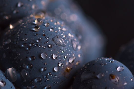 Closeup , dark bunch of grape in low light on black isolated background , macro shot , water drops , berry stone