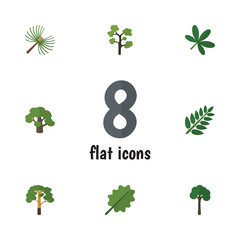 Flat Icon Natural Set Of Tree, Rosemary, Maple And Other Vector Objects. Also Includes Rosemary, Timber, Leaves Elements.