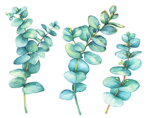 Set of  silver-dollar eucalyptus (Eucalyptus cordata), plant also known as Silver Dollar Gum. Watercolor hand drawn painting illustration, isolated on white background.