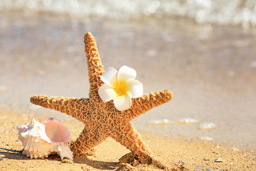 Starfish, shell and flower on sand at sea shore. Vacation concept
