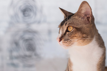 Portrait of cat on white background