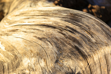 Driftwood  -   Background of a detailed close up of an aged tree burl with a defined texture.