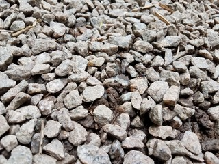 grey pebbles or stones with black ant