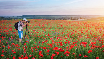 Photographer taking pictures of poppies in the field during sunset