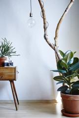urban interior sunny daylight wood cacti gum tree and camera