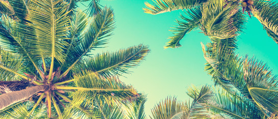 Poster Palmier Blue sky and palm trees view from below, vintage style, summer panoramic background