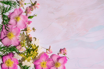Background, blank pastel colors with pink flowers wild rose for greeting cards, web design