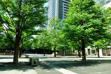 品川 駅前 新緑
