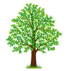 spring summer tree