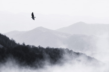 bird flying over misty hills, monochrome nature landscape Wall mural
