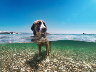 Dog in the water, half underwater
