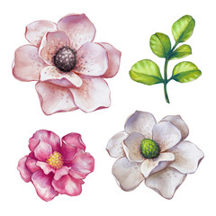 watercolor illustration, magnolia, assorted flower collection, floral design elements isolated on white background