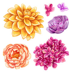 watercolor illustration, assorted flower collection, floral design elements isolated on white background