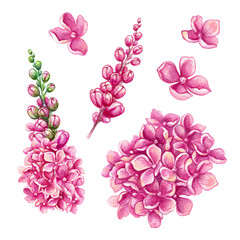 watercolor illustration, assorted pink flower collection, floral design elements isolated on white background