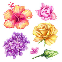 watercolor illustration, hibiscus, rose, peony, lilac, hydrangea, tropical flower collection, floral design elements isolated on white background