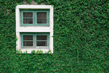old window with green plant background,green nature wall and window object.