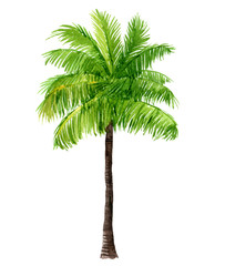 Palm tree, isolated on white background, watercolor illustration