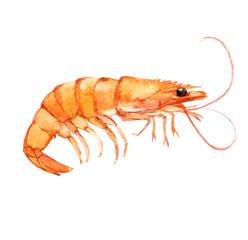 Shrimp isolated on white background, watercolor illustration