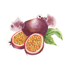 Hand-drawn watercolor illustration of passion fruits isolated on the white background