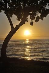 Sonnenuntergang in Maui mit Baum