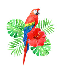 Red macaw parrot with palm leaves, tropical flower isolated on white background, watercolor illustration