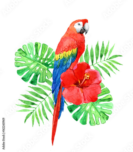 Red macaw parrot with palm leaves, tropical flower isolated