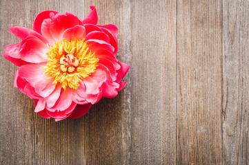 Peony Flower on Rustic Cedar Wood Planks