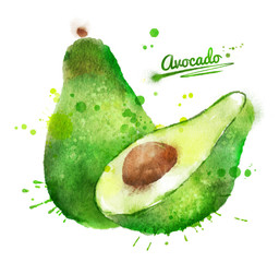 Hand drawn watercolor illustration of avocado