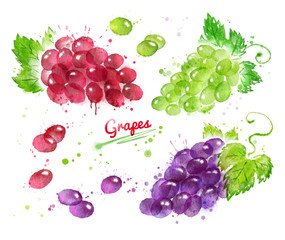 Watercolor collection of bunches of grapes