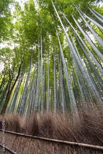 Bambus Wald Bambuswald In Kyoto Japan Asien Stock Photo And