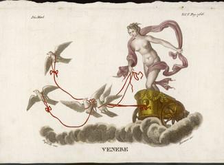 Aphrodite - Venus