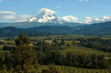 Mount Hood looming over the lush farmlands in the valley below known for their high quality fruit and berries.