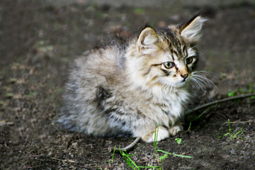 Ruffled little kitten.