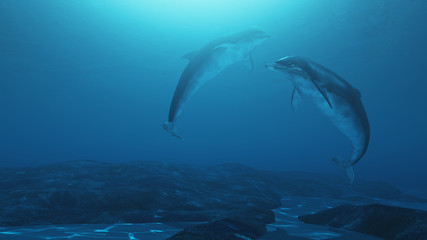 Beautiful and lovely dolphins