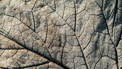 Photo sur Toile Les Textures leaf on cement texture background