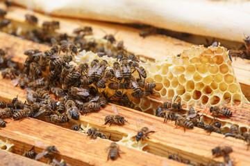 Много пчел поедают остатки меда из сот в улье